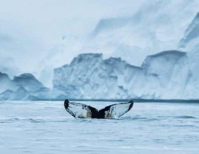 northwest-greenland-in-autumn-icebergs-glaciers-and-inuit-settlements-Guide to Greenland15