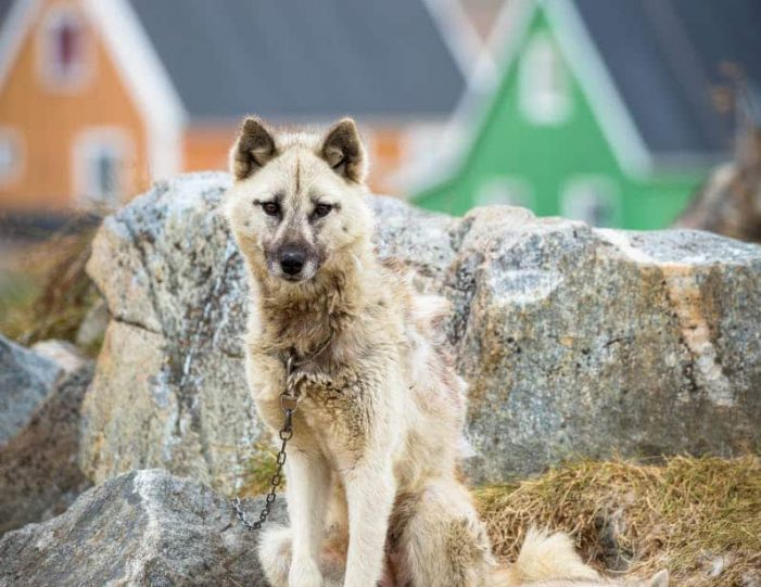 northwest-greenland-in-autumn-icebergs-glaciers-and-inuit-settlements-Guide to Greenland3