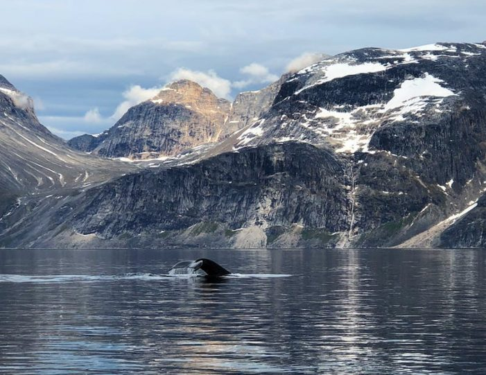 nuuk-fjord-discovery-nuuk - Guide to Greenland (2)
