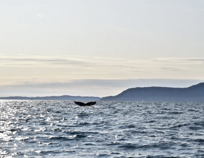 nuuk-fjord-discovery-nuuk - Guide to Greenland (5)