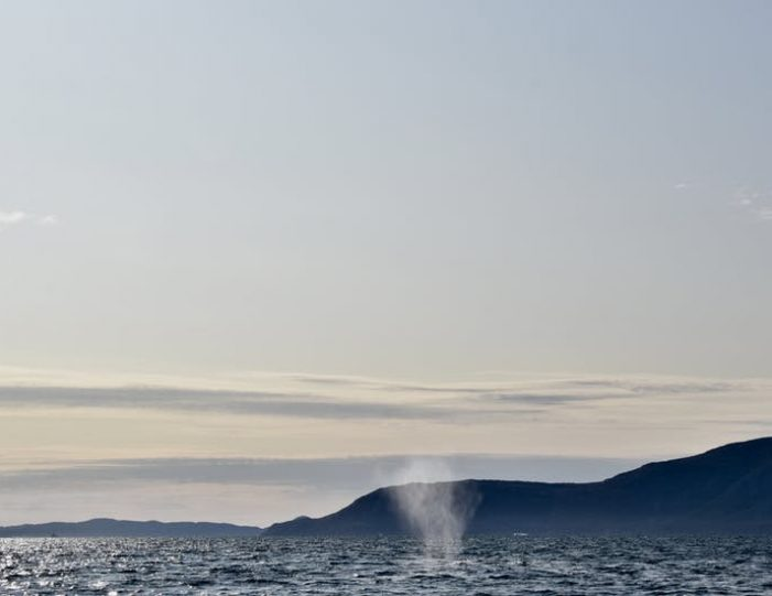 nuuk-fjord-discovery-nuuk - Guide to Greenland (6)