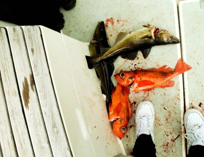 out-of-town-fishing-adventure-private-tour-qooqqut-nuuk - Guide to Greenland3