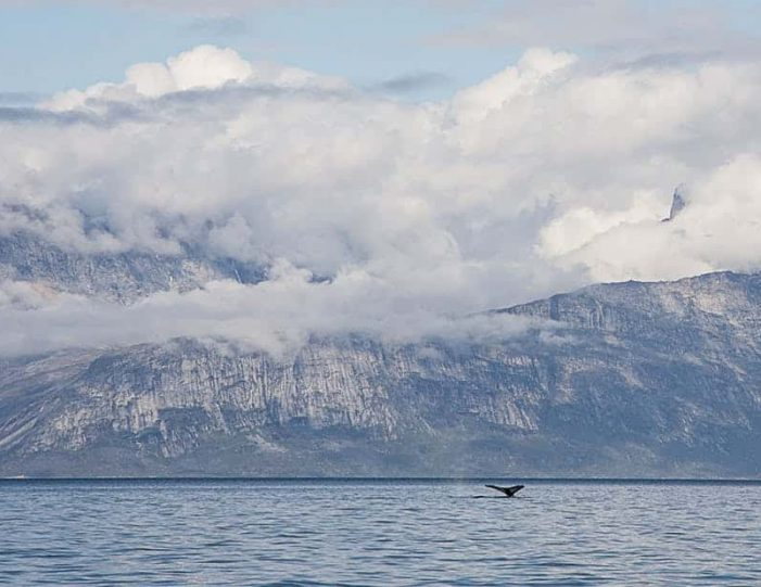 pay-by-the-hour-private-charter-boat-tour-nuuk - Guide to Greenland1
