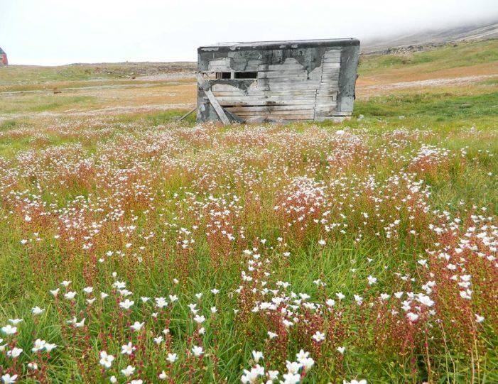 picturesque-settlement-qeqertarsuaq-qaanaaq - Guide to Greenland3