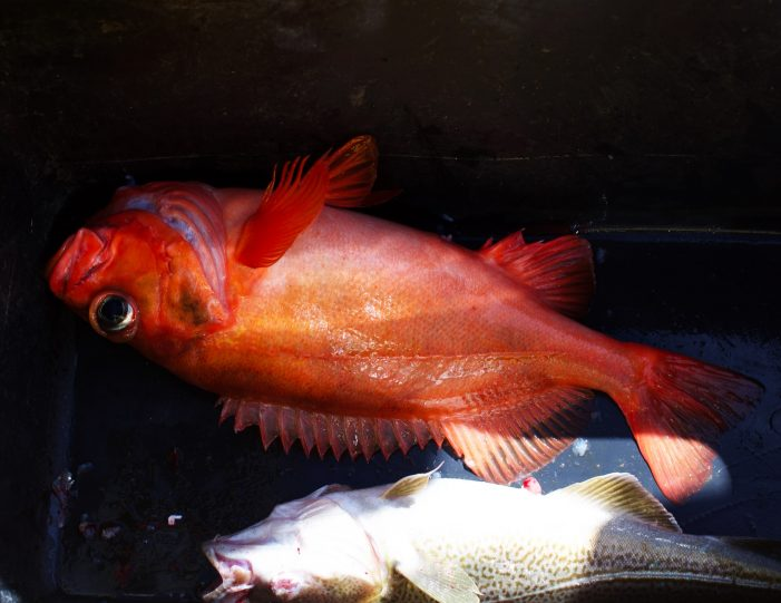 private-deep-sea-fishing-tour-nuuk - Guide to Greenland8