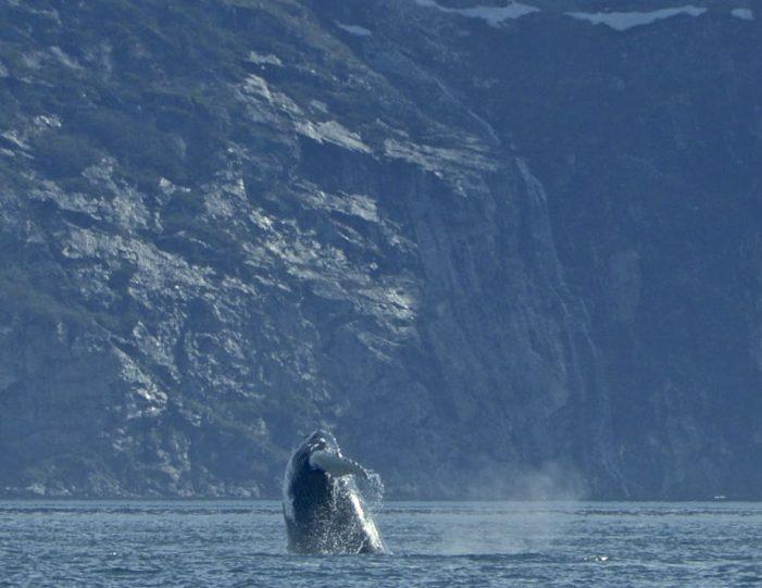 private-fiord-adventure-nuuk - Guide to Greenland7