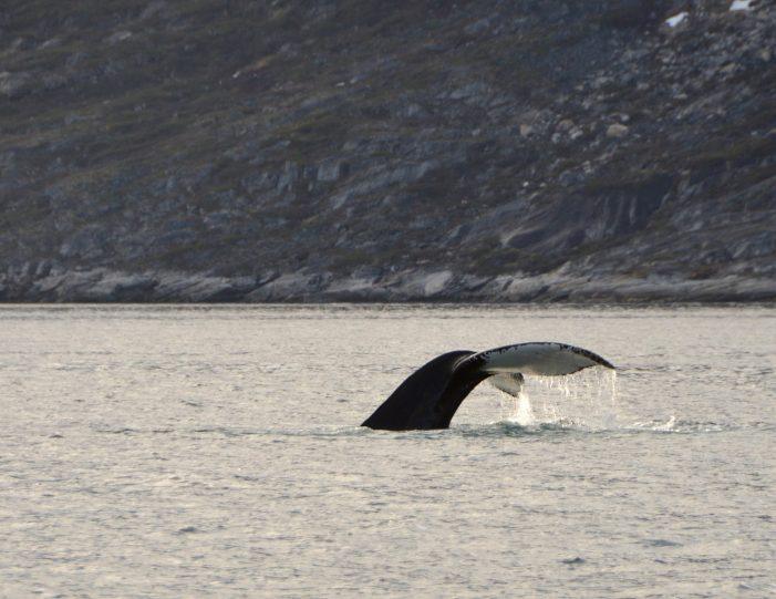 private-fiord-adventure-nuuk - Guide to Greenland8