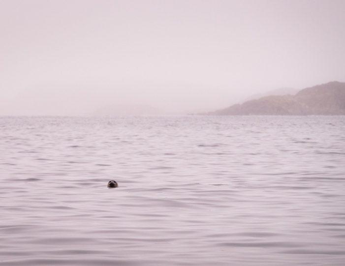 private-sea-safari-in-open-boat-sisimiut - Guide to Greenland7