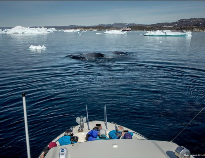 private-whale-safari-ilulissat-disko-bay- Guide to Greenland2