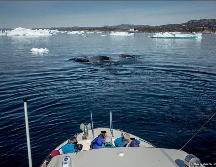 private-whale-safari-ilulissat-disko-bay- Guide to Greenland2