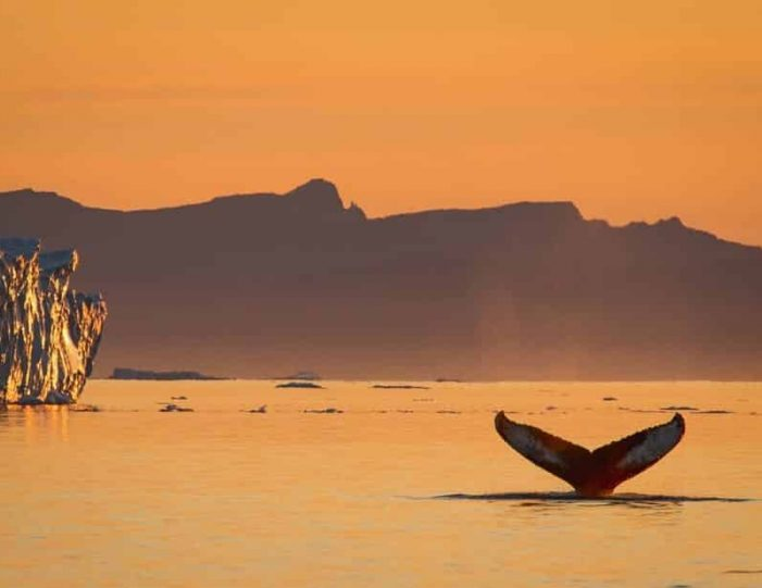 private-whale-safari-ilulissat-disko-bay- Guide to Greenland5