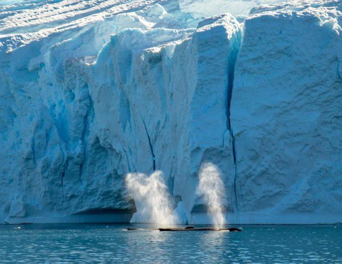 private-whale-safari-uummannaq-north-greenland - Guide to Greenland1