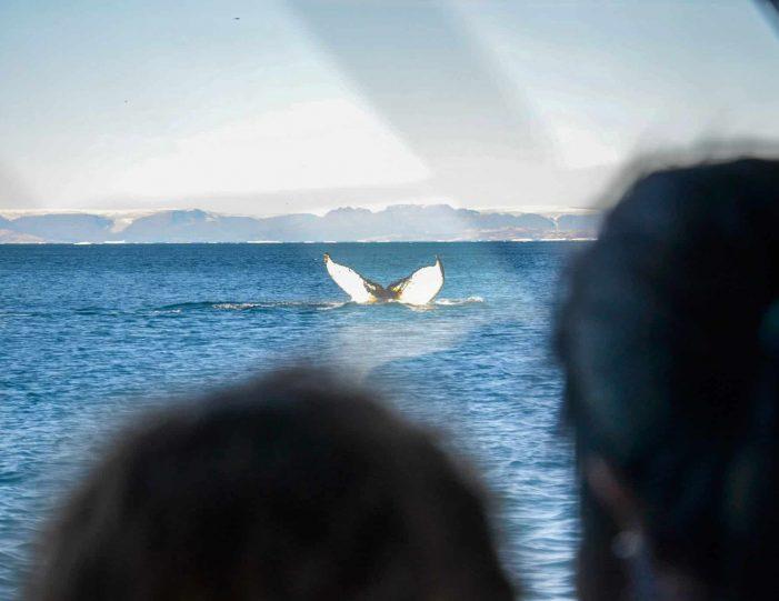 private-whale-safari-uummannaq-north-greenland - Guide to Greenland6