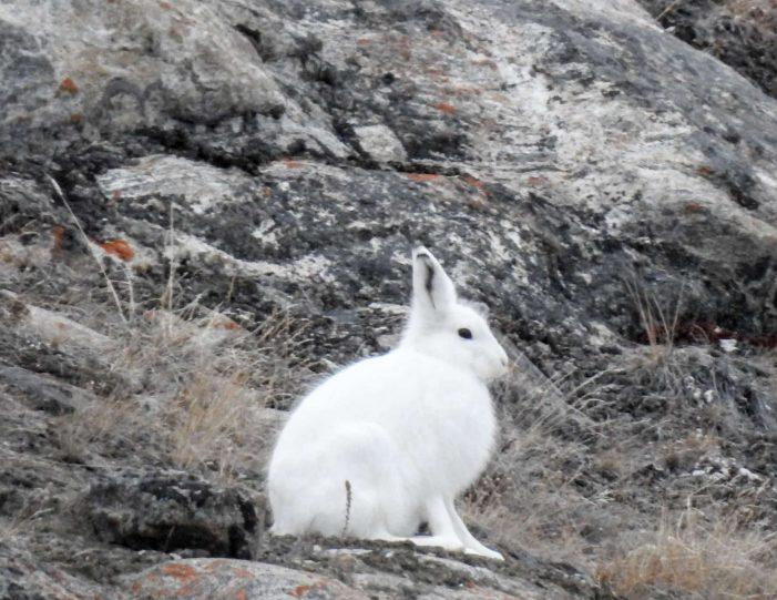 quassussuaq-mountain-hike-nuuk-Guide to Greenland5
