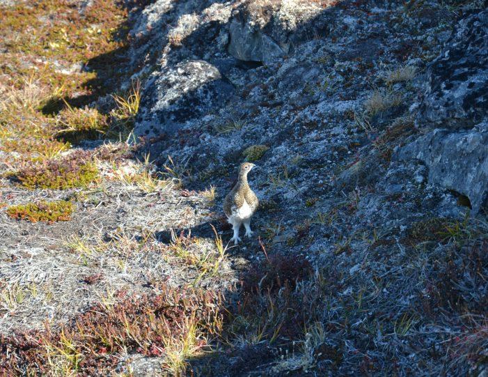quassussuaq-mountain-hike-nuuk-Guide to Greenland6