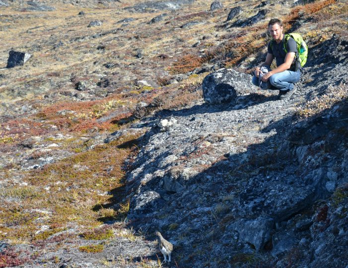 quassussuaq-mountain-hike-nuuk-Guide to Greenland7