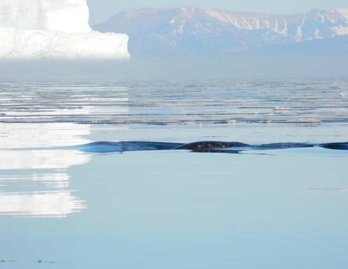 quinissut-glacier-front-qaanaaq - Guide to Greenland7