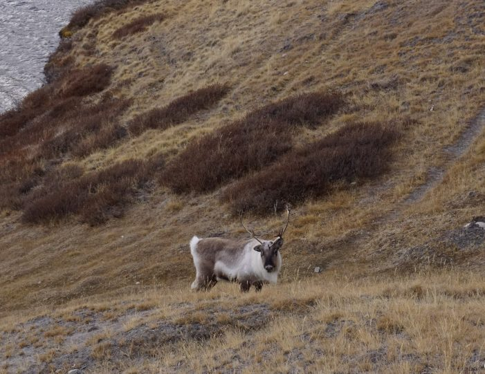 rom the Ice Cap to Unesco Heritage - 9 days | Kangerlussuaq | West Greenland - Guide to Greenland12