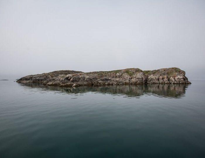 sea-safari-sisimiut-north-greenland - Guide to Greenland2