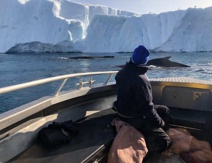 searching-for-humpback-whales-among-icebergs-ilulissat-Guide to Greenland1