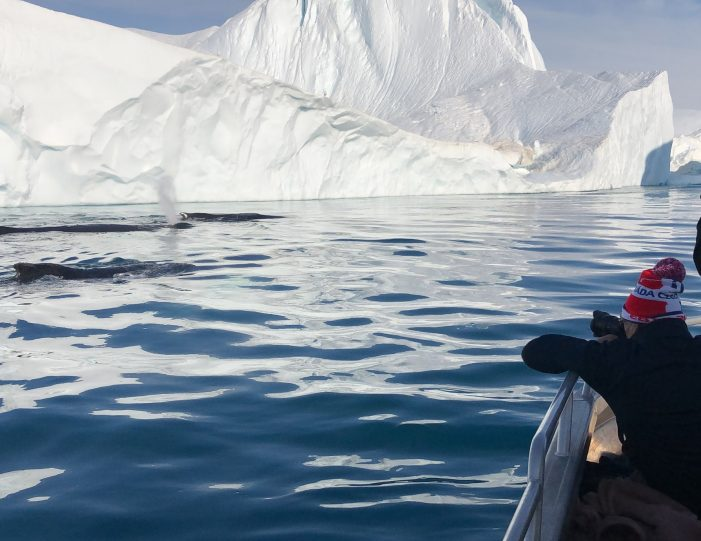 searching-for-humpback-whales-among-icebergs-ilulissat-Guide to Greenland3