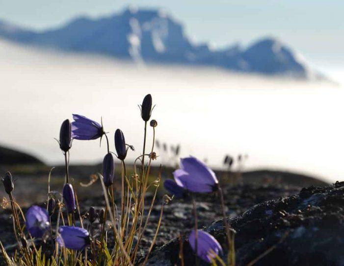 sermermiut-settlement-walk-ilulissat-disko-bay - Guide to Greenland6