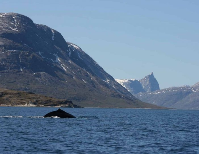 south-west-greenland-8-day-vacation-package-from-iceland-to-greenland-Guide to Greenland2