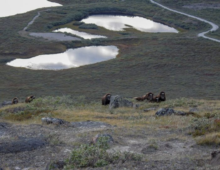sugarloaf-mountain-hike-kangerlussuaq - Guide to Greenland1