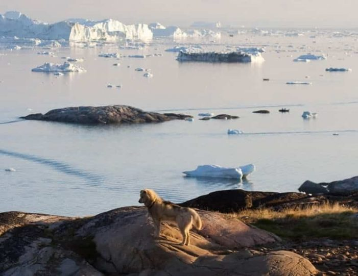 summer-in-ittoqqortoormiit-4-days-east-greenland-Guide to Greenland7