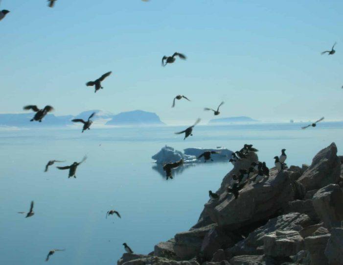 summer-vacation-under-the-midnight-sun-qaanaaq-9