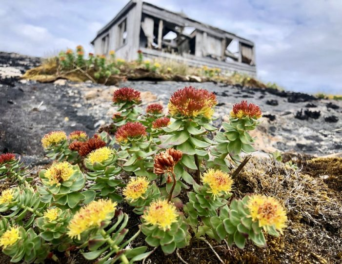 the-abandoned-settlement-of-kangeq-the-island-of-hope-nuuk - Guide to Greenland3