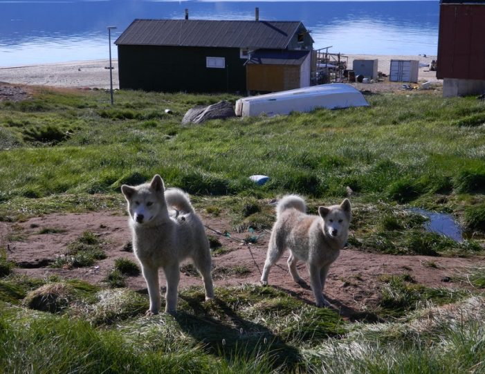 the-northernmost-settlement-siorapaluk-qaanaaq - Guide to Greenland7