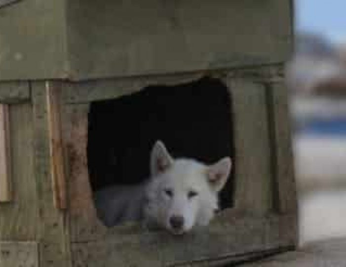 the-sled-dog-experience-ilulissat-disko-bay - Guide to Greenland2
