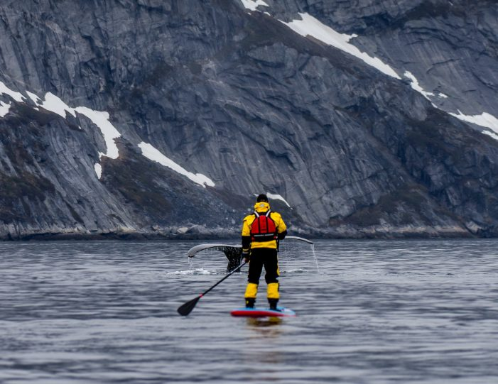 weekend-stand-up-paddleboard-with-whales-or-by-sermitsiaq-waterfall-i-nuuk-8