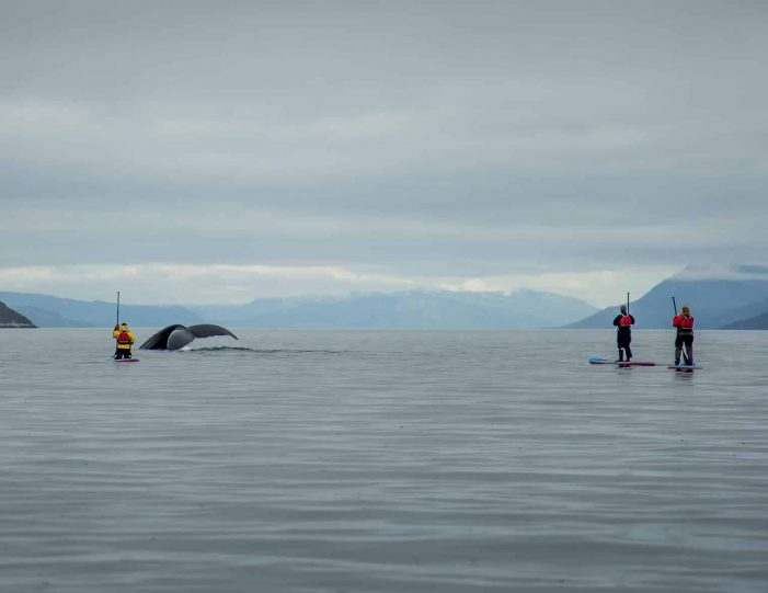 weekend-stand-up-paddleboard-with-whales-or-by-sermitsiaq-waterfall-i-nuuk-9