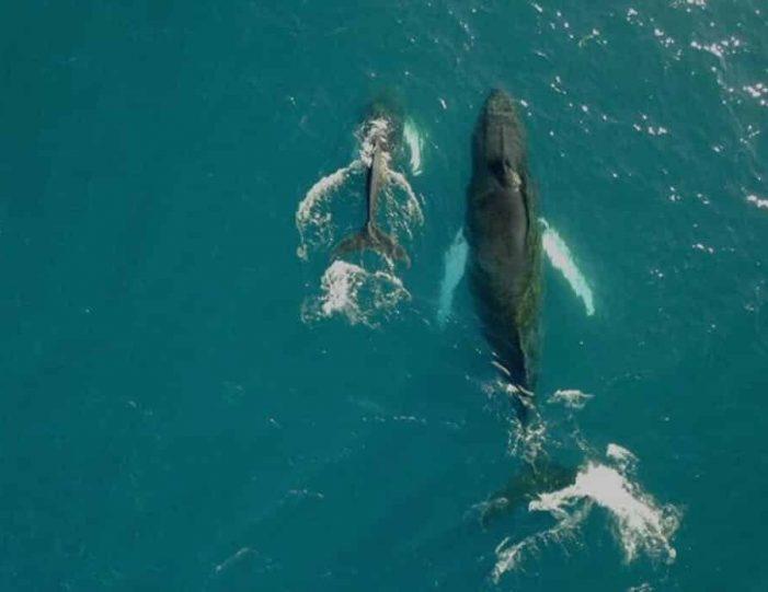 whale-safari-ilulissat-disko-bay - Guide to Greenland1