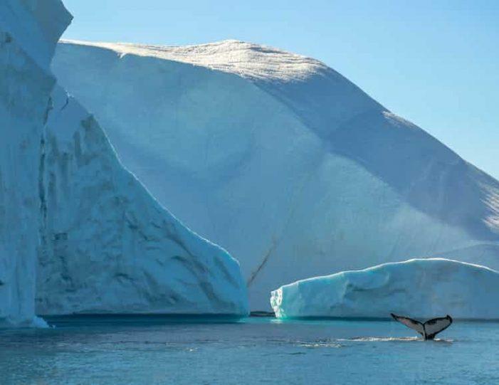 whale-safari-ilulissat-disko-bay - Guide to Greenland7