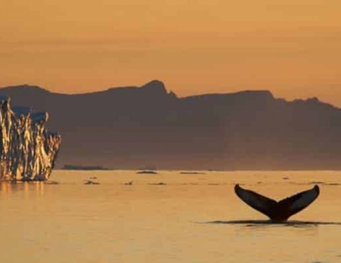 whale-watching-and-iceberg-safari-tasiilaq-east-greenland - Guide to Greenland9