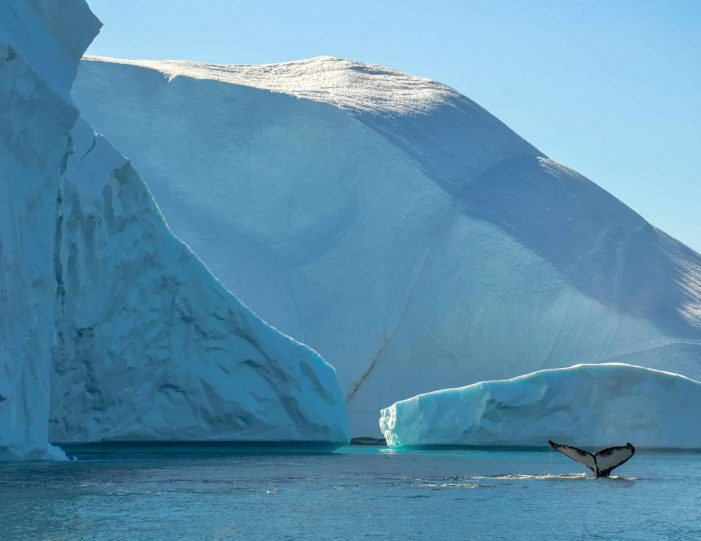 whales-ice-private-tour-ilulissat-disko-bay-Guide to Greenland12