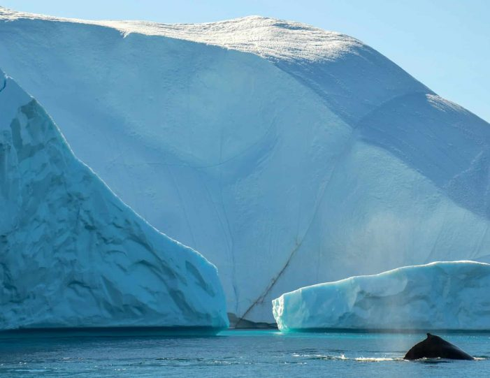whales-ice-private-tour-ilulissat-disko-bay-Guide to Greenland3