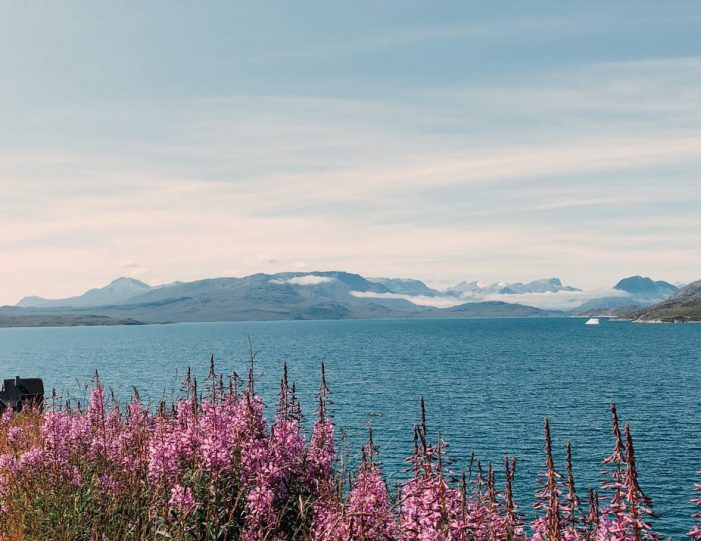 wild-flowers-and-view-to-the-water-in-kapisillit-settlement-nuuk-fjord-guide-to-greenland-13
