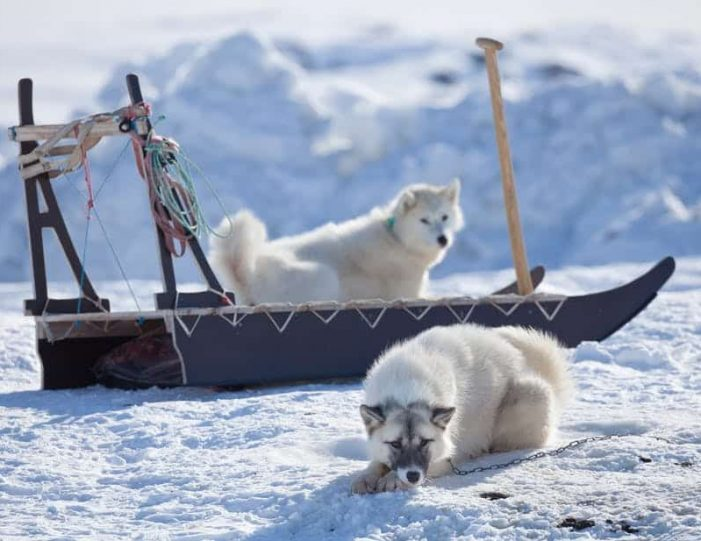 winter-in-northwest-greenland-icebergs-glaciers-inuit-day-Guide to Greenland3